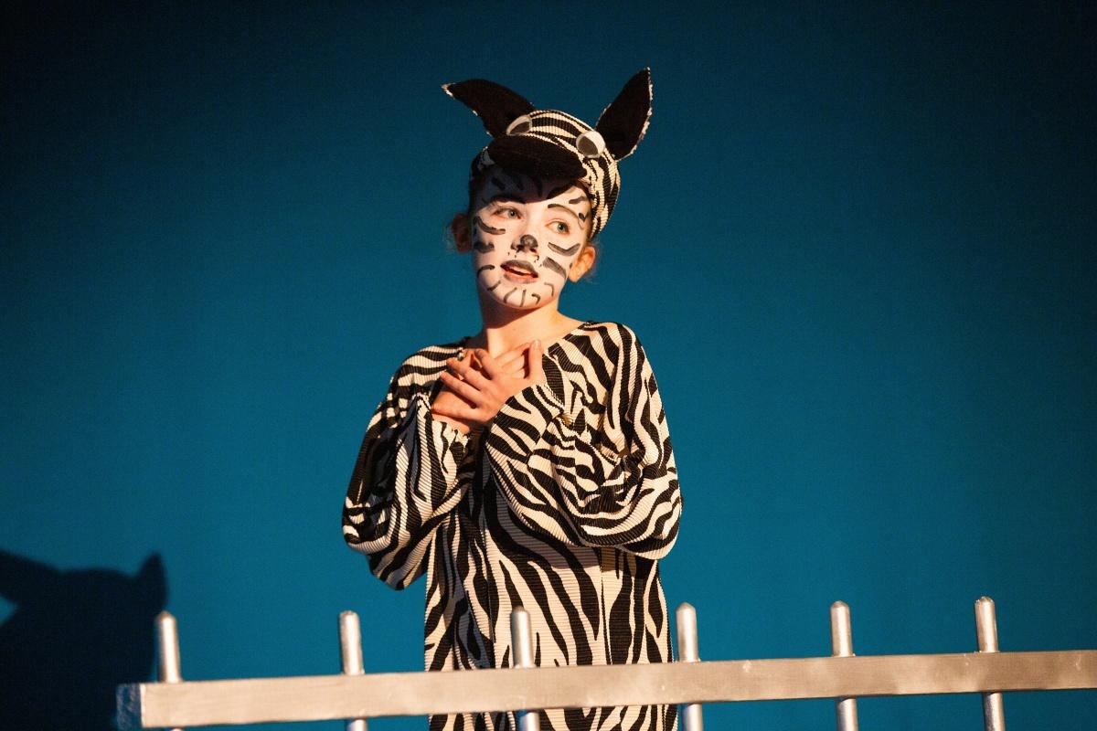 rhs-ps-madagascar-zebra