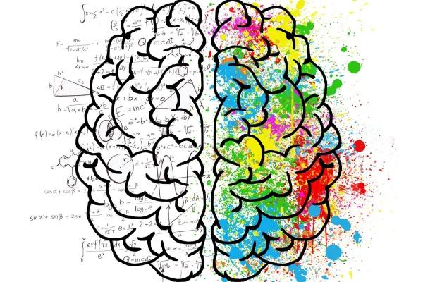 Brain 2062057 1920